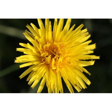 Bachblüten Anamnese & Auswertung & Beratung