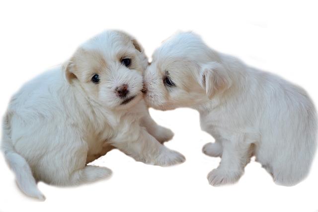Welpen müssen noch so viel wachsen - Vita pro für Hunde nicht vergessen