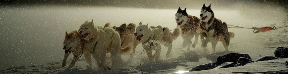 Hunde mit Ausdauer und Leistung - Canipur Racepower